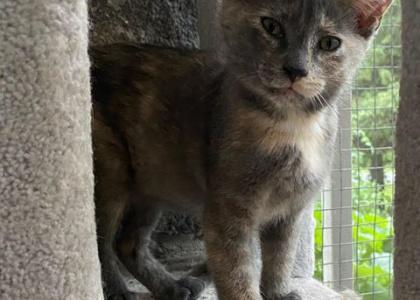 Winnie- Kitten