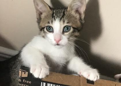 Jasmine-Kitten