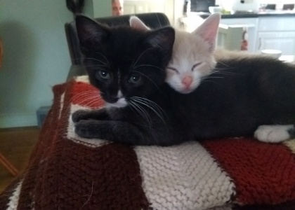 Cody and Cleo-Kitten