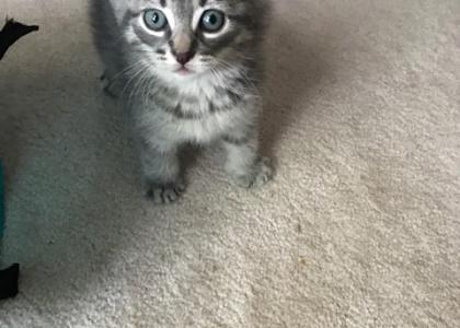Cantaloupe-Kitten