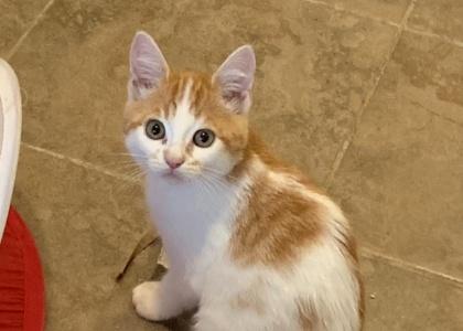 Jack- Kitten