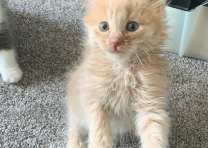 Cashew-Kitten
