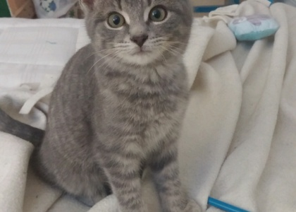 Alexander-Kitten