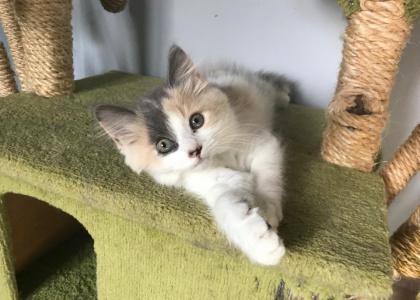 Maddy-Kitten