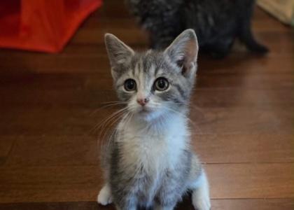 Darla-Kitten