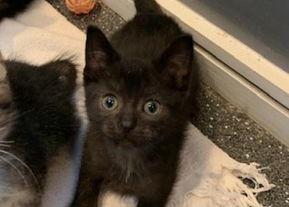 Joey-Kitten