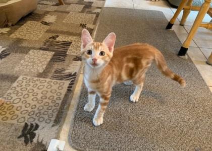 Chase- Kitten