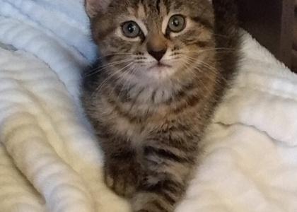 Paxy-Kitten