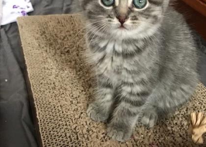 Selena-Kitten