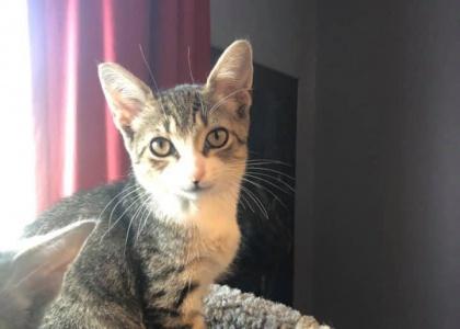 Jake- Kitten