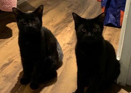 Ozzy and Ophelia-Teen