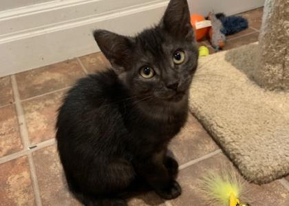 Grace- Kitten