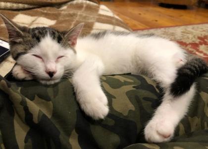 Quill-Kitten