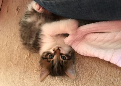 PK-Kitten