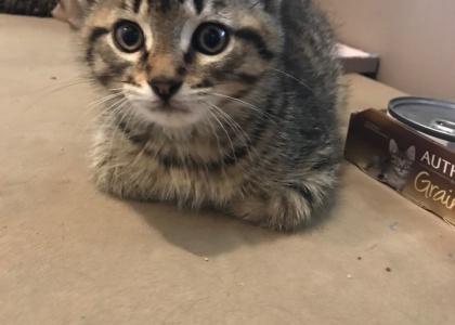 Burt-Kitten