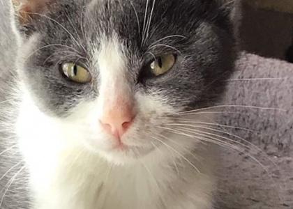 Sassy-Kitten