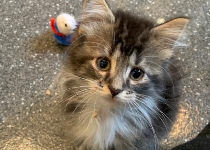Maria- Kitten