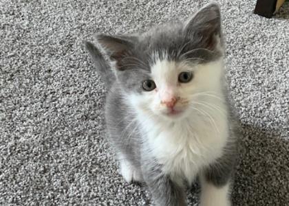Sparky-Kitten