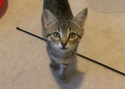 Julia- Kitten