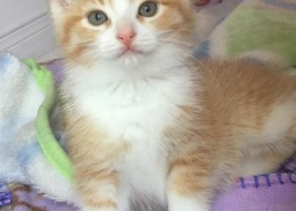 Faith-Kitten