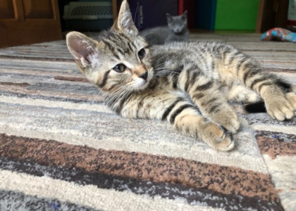 Drake-Kitten