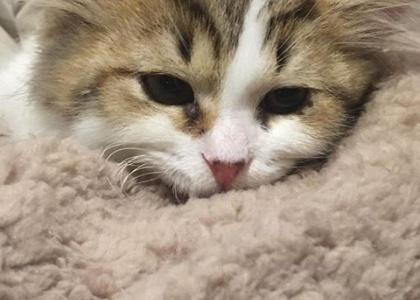 Kaden-Kitten