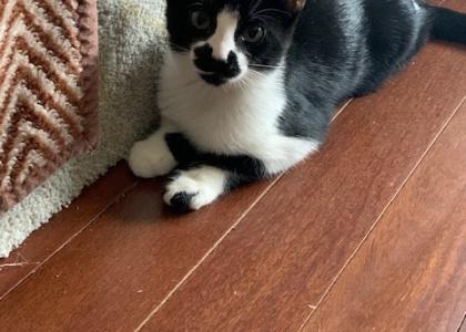 Cookie-Kitten