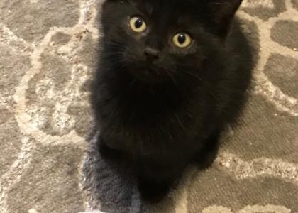 Spanky-Kitten