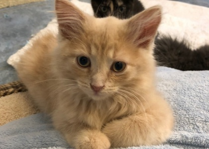 Samuel-Kitten