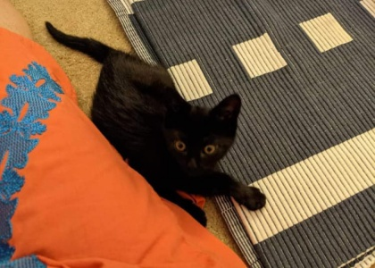 Andre-Kitten