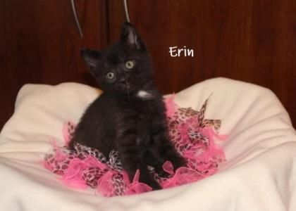 Erin-Kitten