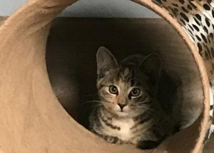 Java-Kitten