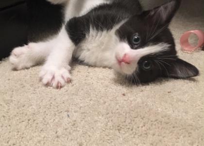 Tank-Kitten