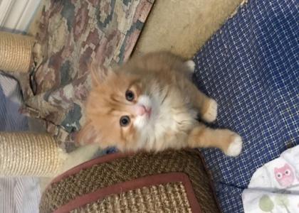Richie-Kitten