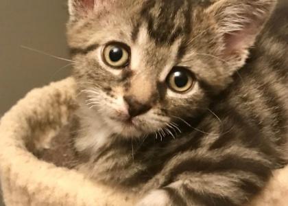 Paris-Kitten