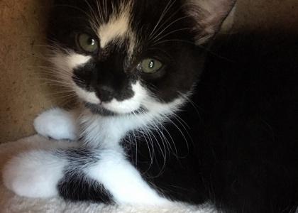 Cosmo-Kitten