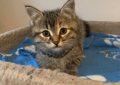 Robyn-Kitten