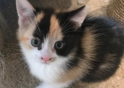 Flopsy-Kitten