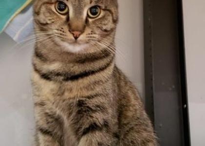 Tabitha-Kitten