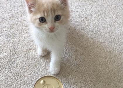 Spike-Kitten