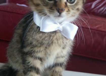 Jamie-Kitten