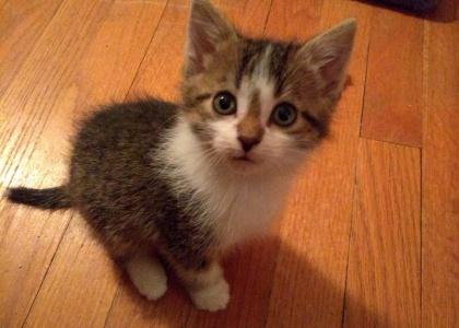 Riley-Kitten