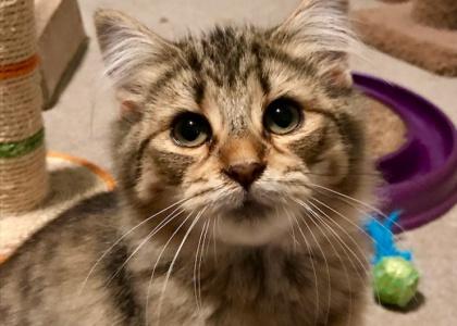 Darley-Kitten