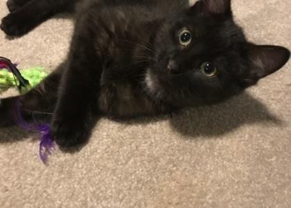 Matrix-Kitten