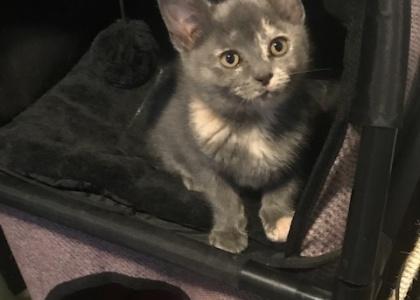 Laurel-Kitten