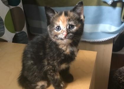 Sequoia-Kitten