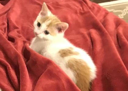Lyla-Kitten