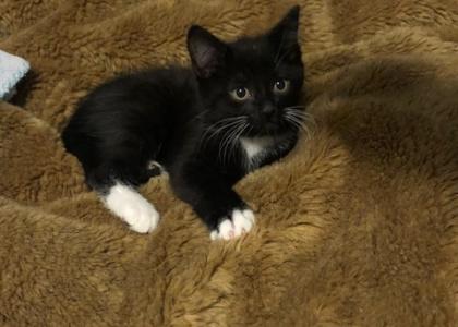 Popper-Kitten