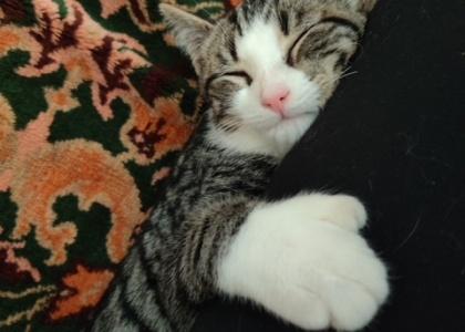 Saturn- Kitten