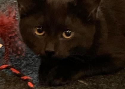 Shane-kitten